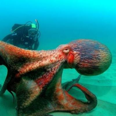 Dance with the octopus
